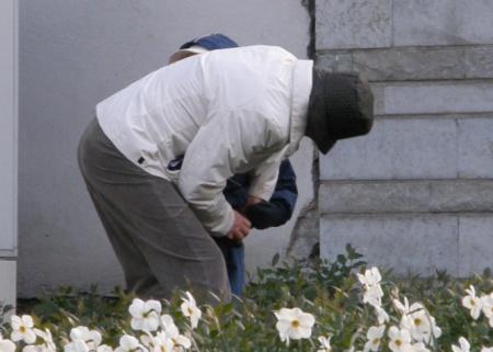 Suomalaset turistid virtsavat Tallinnassa kukkien keskellä
