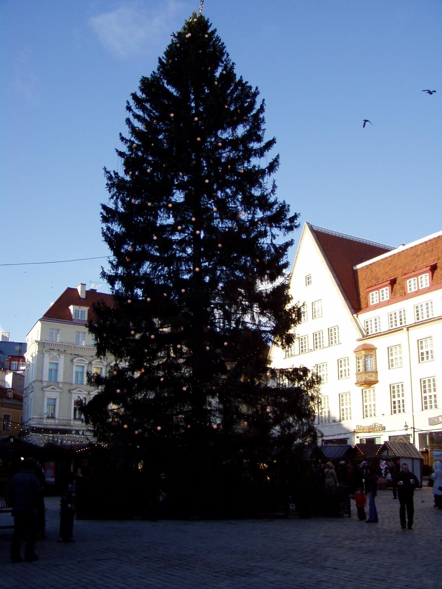 0808873_raekoja_platsi_kuusk2008_jouluturg_p1017007