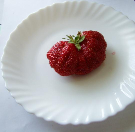 Suur maasikas taldrikul, tervislik vahepala. Foto Virgo Kruve