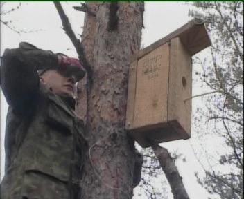 Sõdur seob traadiga pesakasti puu külge, et see edaspidi sooniks puukoore sisse.