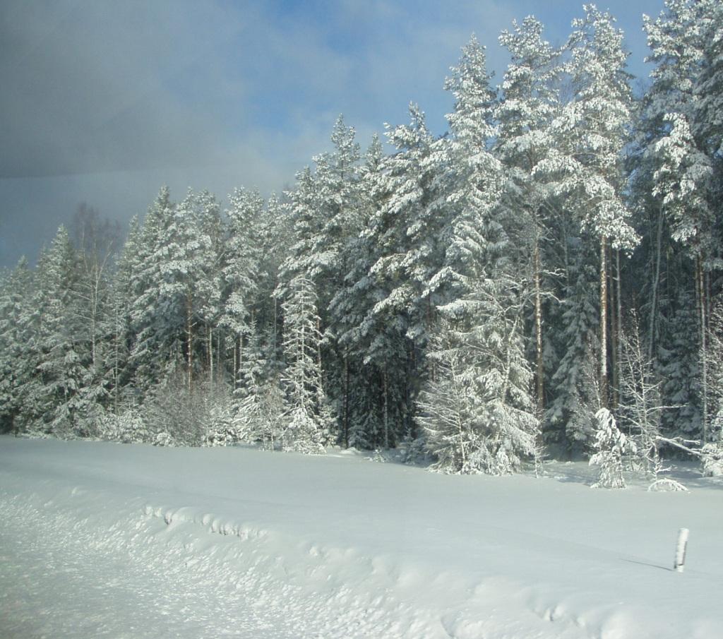 Talvise metsa pildi saab ka suuremaks klikkida. Autori foto 30. märts 2011 hommikust.
