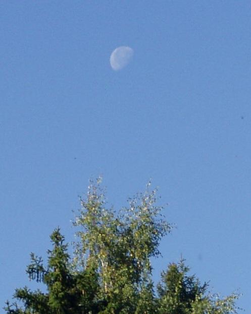 Päeval kella 10 ajal võib näha Kuud puude latvade kohal. Autori foto